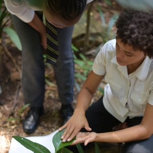 Learning about Forests (LEAF)